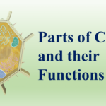 Parts of Cell and their Functions